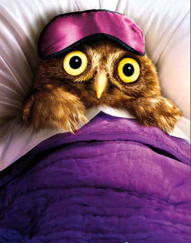Goodnight hoot hoot owl